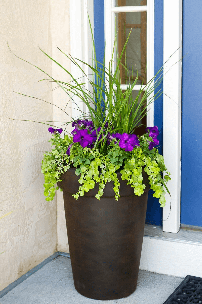 HOW TO USE BRONZE POT WITH MIXED PLANTS FOR SIMPLE PORCH DECOR IDEAS