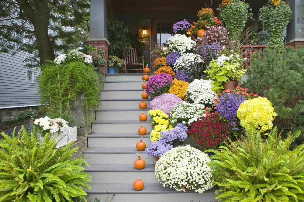 COVERED PORCH GARDEN IDEAS WITH THICK FLOWERING BUSHES AND PIE PUMPKINS